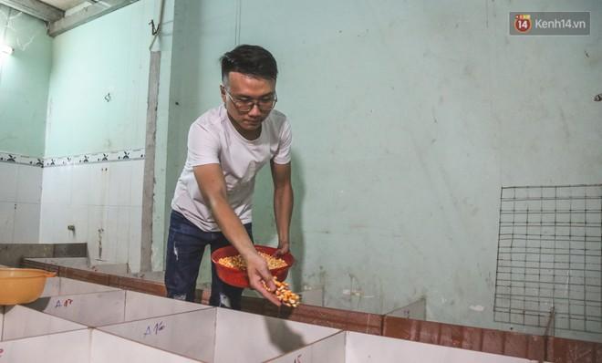 Chàng sinh viên Sài Gòn thu nhập 40 triệu đồng/tháng nhờ nuôi dúi bằng máy lạnh - ảnh 5