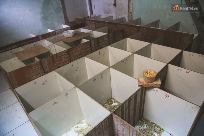 Chàng sinh viên Sài Gòn thu nhập 40 triệu đồng/tháng nhờ nuôi dúi bằng máy lạnh - ảnh 9