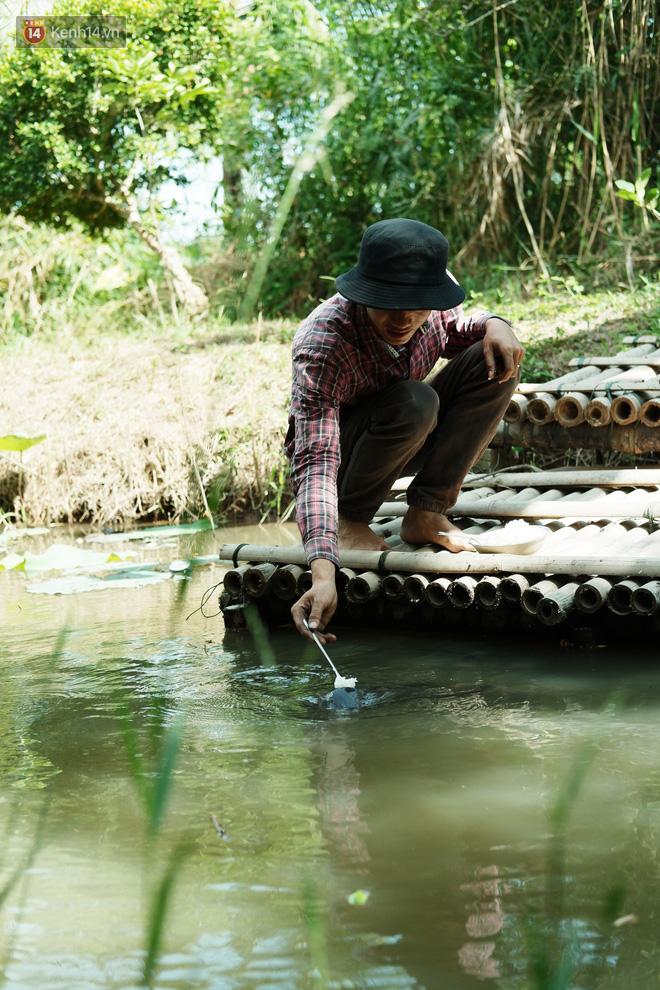 Kỳ lạ đàn cá tai tượng biết... nhõng nhẽo, ăn cơm trắng phải đút bằng muỗng của chàng trai 9X ở miền Tây - ảnh 5