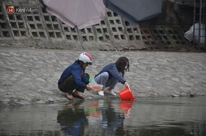 Hà Nội: Cá chép vàng chết nổi khi vừa được thả xuống hồ Hoàng Cầu ngày ông Công ông Táo - ảnh 1
