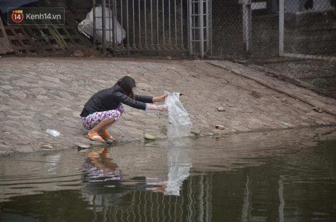 Hà Nội: Cá chép vàng chết nổi khi vừa được thả xuống hồ Hoàng Cầu ngày ông Công ông Táo - ảnh 4