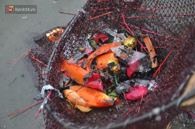 Hà Nội: Cá chép vàng chết nổi khi vừa được thả xuống hồ Hoàng Cầu ngày ông Công ông Táo - ảnh 15