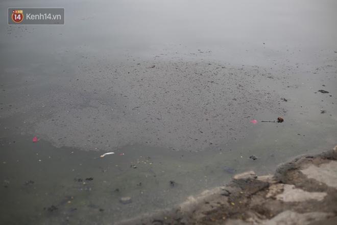 Hà Nội: Cá chép vàng chết nổi khi vừa được thả xuống hồ Hoàng Cầu ngày ông Công ông Táo - ảnh 9