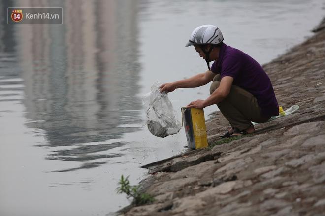 Hà Nội: Cá chép vàng chết nổi khi vừa được thả xuống hồ Hoàng Cầu ngày ông Công ông Táo - ảnh 7