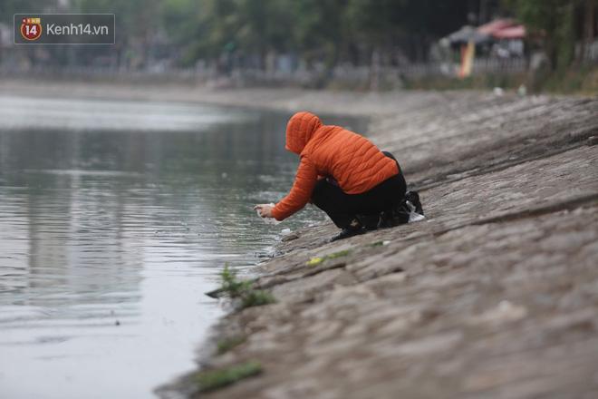 Hà Nội: Cá chép vàng chết nổi khi vừa được thả xuống hồ Hoàng Cầu ngày ông Công ông Táo - ảnh 6