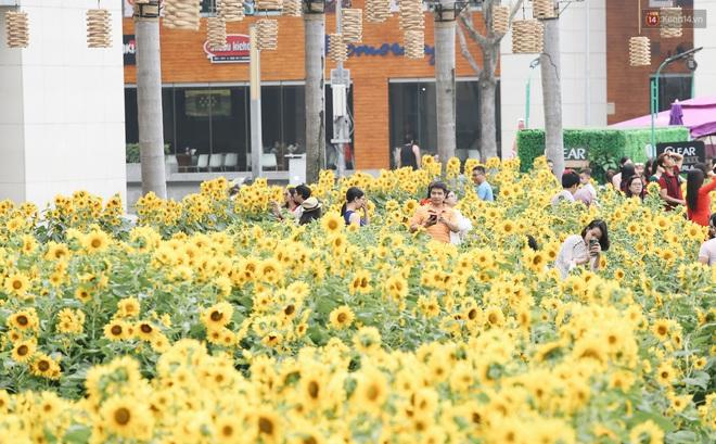 Phố nhà giàu Phú Mỹ Hưng đón Tết Canh Tý với đường hoa xuân đầy lúa và bắp ngô, tái hiện khung cảnh làng quê bình dị - ảnh 8