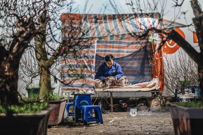 Những người nông dân chong lều canh đào, quất giữa cái lạnh 14 độ C của Hà Nội: Như đánh một canh bạc, bại nhiều hơn thắng - ảnh 2