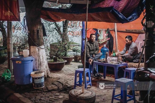 Những người nông dân chong lều canh đào, quất giữa cái lạnh 14 độ C của Hà Nội: Như đánh một canh bạc, bại nhiều hơn thắng - ảnh 8