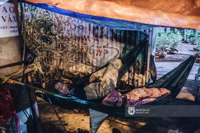Những người nông dân chong lều canh đào, quất giữa cái lạnh 14 độ C của Hà Nội: Như đánh một canh bạc, bại nhiều hơn thắng - ảnh 16