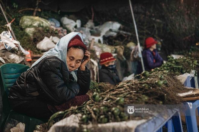 Những người nông dân chong lều canh đào, quất giữa cái lạnh 14 độ C của Hà Nội: Như đánh một canh bạc, bại nhiều hơn thắng - ảnh 11
