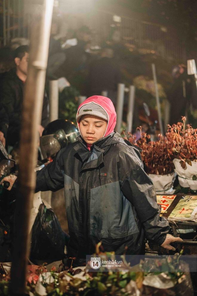 Những người nông dân chong lều canh đào, quất giữa cái lạnh 14 độ C của Hà Nội: Như đánh một canh bạc, bại nhiều hơn thắng - ảnh 4