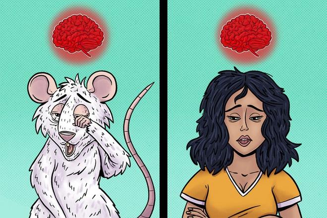 Tác hại kinh khủng của việc thiếu ngủ: Não bộ của bạn có thể tự ăn chính nó và đây là cách để thảm họa này không xảy ra - ảnh 5