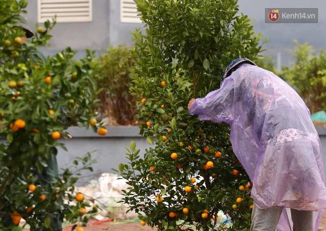 Hà Nội: Mưa gió chiều 30 Tết lại bị ép giá, người buôn đào quất quyết vặt trụi hoa quả và bỏ lại núi rác - ảnh 2