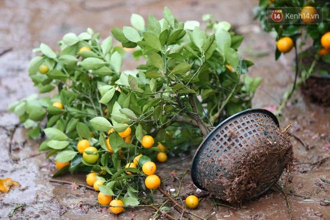 Hà Nội: Mưa gió chiều 30 Tết lại bị ép giá, người buôn đào quất quyết vặt trụi hoa quả và bỏ lại núi rác - ảnh 11
