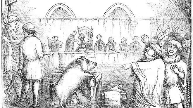 Khi luật sư đem tài biện hộ ra bảo vệ… chuột: Vô cùng năng nổ, sắc bén, hợp tình hợp lý đến nỗi đáng được ngả mũ bái phục - ảnh 1
