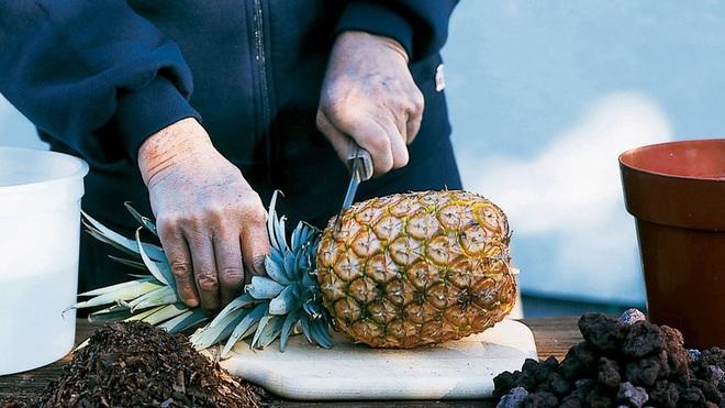 Quả dứa ăn rất tốt cho sức khỏe nhưng có 2 loại thực phẩm tuyệt đối đừng ăn cùng nó kẻo bị ngộ độc thực phẩm - Ảnh 1.