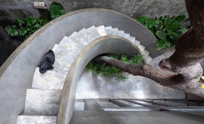 Bước vào ngôi nhà trong ngõ rộng 3m được phủ xanh bằng cây cối, ai cũng thích thú với chiếc cầu thang cực hợp sống ảo - Ảnh 6.