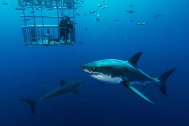 Kỷ lục người chết vì cá mập cắn suốt gần 100 năm tại Úc bị phá vỡ, lý do phía sau còn khiến chúng ta suy ngẫm nhiều hơn - Ảnh 2.