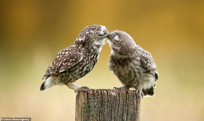 Đem tình yêu rải khắp thế gian trong ngày lễ tình nhân với chùm ảnh động vật âu yếm nhau cực tình tứ và siêu đáng yêu - ảnh 5