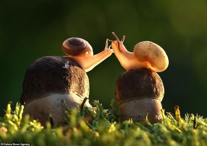 Đem tình yêu rải khắp thế gian trong ngày lễ tình nhân với chùm ảnh động vật âu yếm nhau cực tình tứ và siêu đáng yêu - ảnh 7