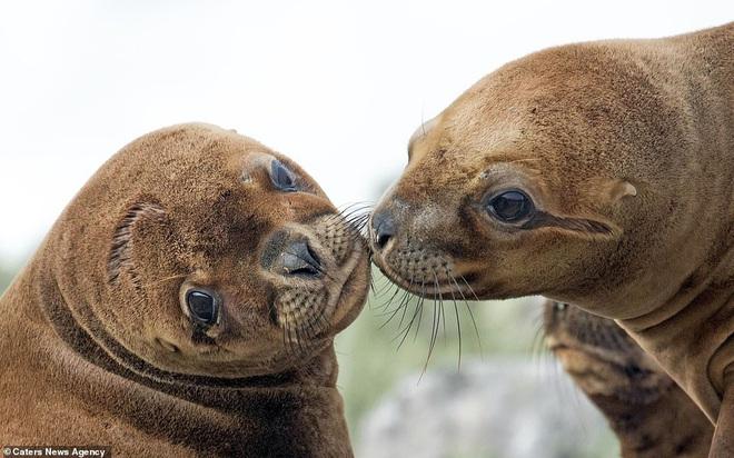 Đem tình yêu rải khắp thế gian trong ngày lễ tình nhân với chùm ảnh động vật âu yếm nhau cực tình tứ và siêu đáng yêu - ảnh 10