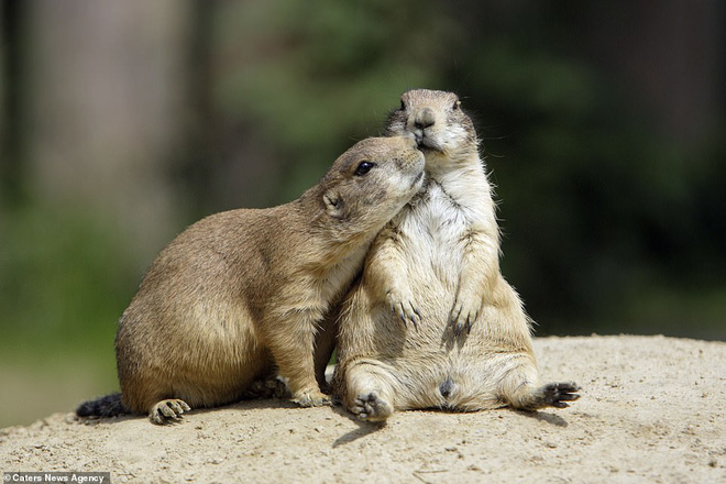 Đem tình yêu rải khắp thế gian trong ngày lễ tình nhân với chùm ảnh động vật âu yếm nhau cực tình tứ và siêu đáng yêu - ảnh 11