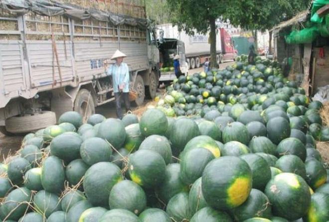 Gần 1.000 container nông sản ùn ứ tại cửa khẩu - ảnh 1