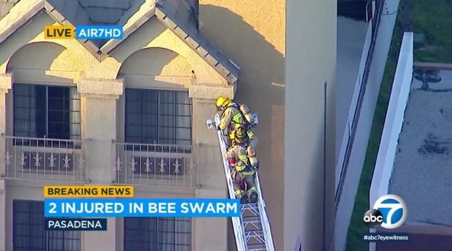 Đến giải cứu người bị một con ong chích, nhóm lính cứu hộ bỗng chuốc họa khi anh em họ hàng nhà ong kéo gần 40.000 con tới tiếp ứng - ảnh 1