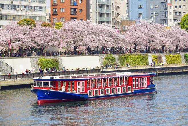 Bữa tiệc trên sông Sumida - sự kiện gây lây lan virus corona đáng sợ không kém du thuyền Diamond Princess ở Nhật Bản - ảnh 1
