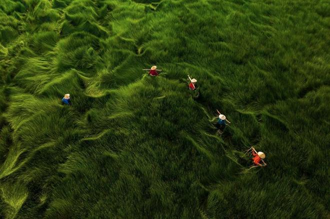 """Bộ ảnh đồng cỏ Việt Nam """"lượn sóng"""" đang gây bão mạng quốc tế, nhưng cả ngàn người nước ngoài lại bị nhầm lẫn ở một điểm này - Ảnh 3."""