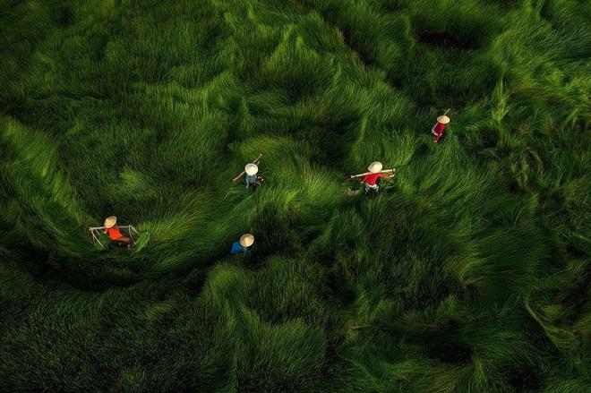 """Bộ ảnh đồng cỏ Việt Nam """"lượn sóng"""" đang gây bão mạng quốc tế, nhưng cả ngàn người nước ngoài lại bị nhầm lẫn ở một điểm này - Ảnh 6."""