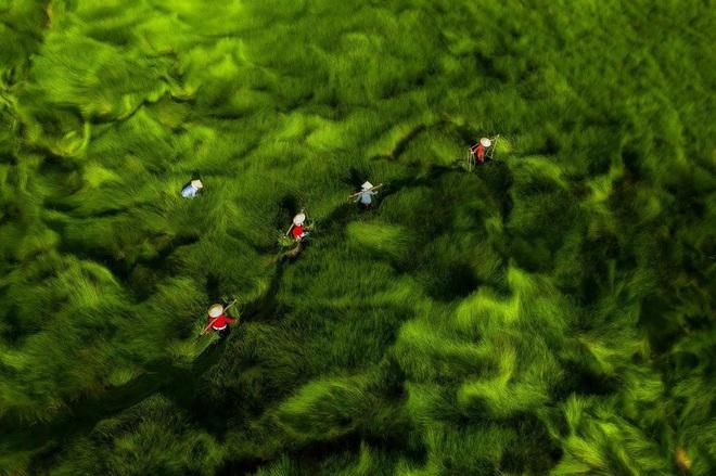 """Bộ ảnh đồng cỏ Việt Nam """"lượn sóng"""" đang gây bão mạng quốc tế, nhưng cả ngàn người nước ngoài lại bị nhầm lẫn ở một điểm này - Ảnh 8."""