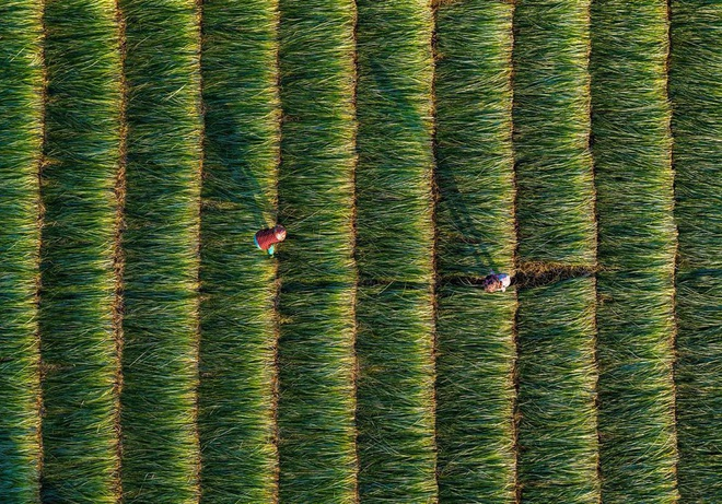 """Bộ ảnh đồng cỏ Việt Nam """"lượn sóng"""" đang gây bão mạng quốc tế, nhưng cả ngàn người nước ngoài lại bị nhầm lẫn ở một điểm này - Ảnh 7."""