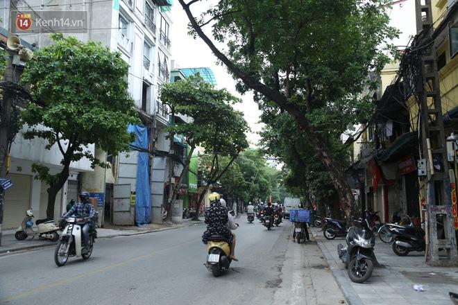 Ảnh: Cận cảnh hàng loạt cây xanh mục gốc, ngả hướng ra giữa đường ở Hà Nội - Ảnh 2.
