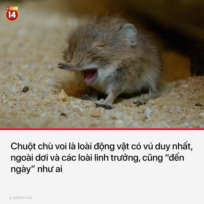 14 sự thật ngoạn mục và cục súc về đời sống tình dục của các loài động vật - Ảnh 7.