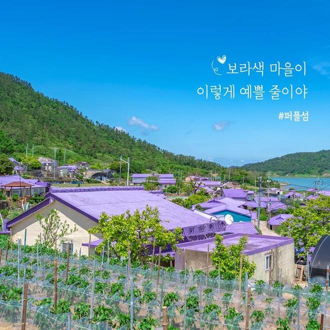 """Một hòn đảo kỳ lạ vừa xuất hiện ở Hàn Quốc đã tạo cơn bão check-in trên MXH: Tất cả mọi thứ đều nhuốm màu """"tím lịm tìm sim"""" - Ảnh 1."""