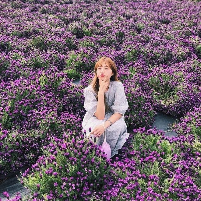 """Một hòn đảo kỳ lạ vừa xuất hiện ở Hàn Quốc đã tạo cơn bão check-in trên MXH: Tất cả mọi thứ đều nhuốm màu """"tím lịm tìm sim"""" - Ảnh 6."""