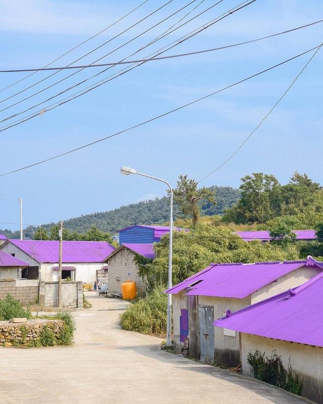 """Một hòn đảo kỳ lạ vừa xuất hiện ở Hàn Quốc đã tạo cơn bão check-in trên MXH: Tất cả mọi thứ đều nhuốm màu """"tím lịm tìm sim"""" - Ảnh 9."""