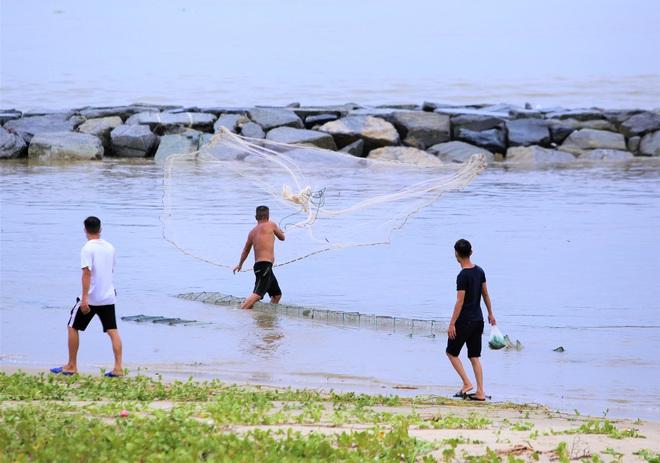 Sau bão, người dân Đà Nẵng ra các miệng cống xả, cửa sông quăng chài bắt cá khủng - Ảnh 5.