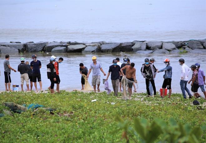 Sau bão, người dân Đà Nẵng ra các miệng cống xả, cửa sông quăng chài bắt cá khủng - Ảnh 3.
