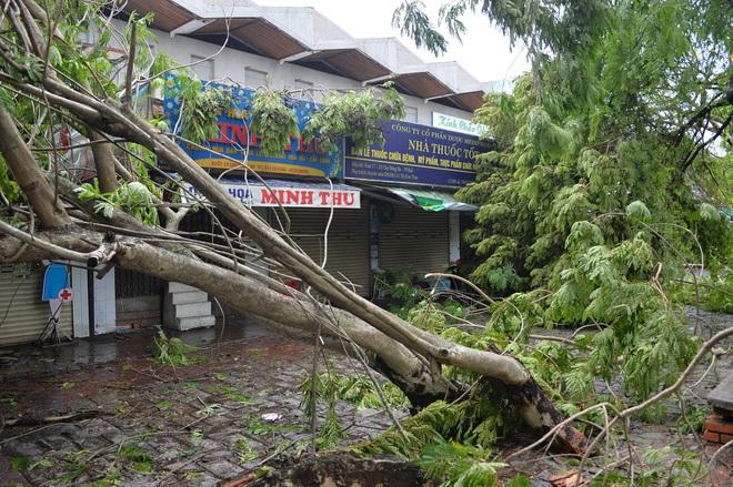 Cây ngã la liệt khiến 1 người chết và nhiều người bị thương, toàn tỉnh Thừa Thiên Huế mất điện sau khi bão số 5 đổ bộ - Ảnh 5.