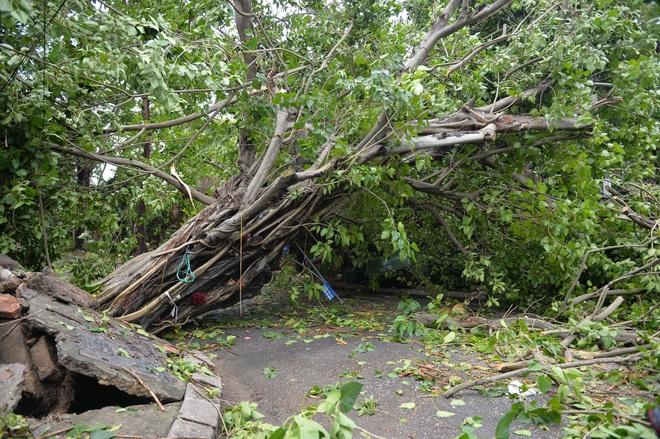 Cây ngã la liệt khiến 1 người chết và nhiều người bị thương, toàn tỉnh Thừa Thiên Huế mất điện sau khi bão số 5 đổ bộ - Ảnh 7.