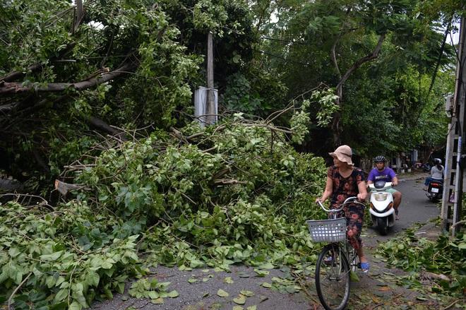 Cây ngã la liệt khiến 1 người chết và nhiều người bị thương, toàn tỉnh Thừa Thiên Huế mất điện sau khi bão số 5 đổ bộ - Ảnh 12.