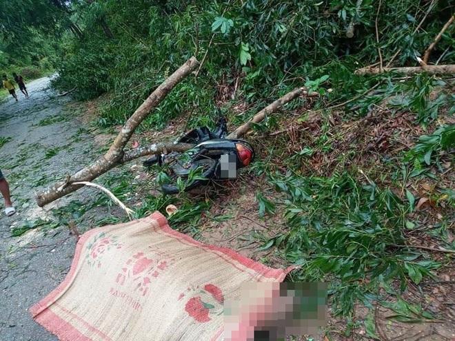 Bão số 5 khiến 23 người bị thương, 1 người đàn ông đi xe máy bị cây đè tử vong - Ảnh 1.
