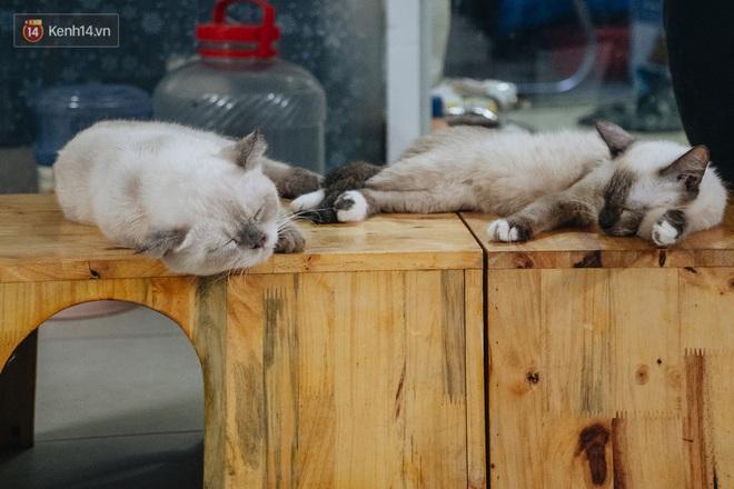 Chàng trai 24 tuổi bỏ công việc ổn định để cứu trợ mèo, mái ấm của các bé mèo lên hãng thông tấn AFP của Pháp - Ảnh 4.