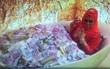 Nữ đại gia Malaysia gây tranh cãi khi đăng tải bức ảnh nằm giữa bồn tắm chất đầy tiền và trang sức