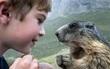 Suốt 9 năm, cậu bé không quản khó khăn, leo lên đỉnh Alps thăm những người bạn chuột chũi của mình