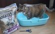 Quên xỉ than đi, các bé mèo chỉ thích cát vệ sinh thôi