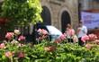 Đến Bà Nà Hills ngắm hơn 100 loài hoa đua nở