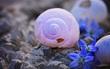 Chọn con ốc sên để nhận được lời khuyên cho cuộc sống tươi đẹp hơn